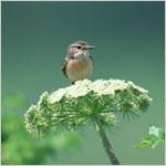モーニングBGM (小鳥の声入)